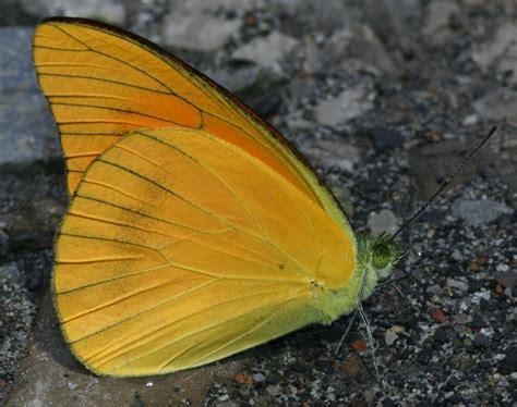 Buttering Flutterbies 2 by Butterflies