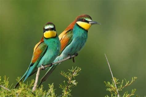 las aves exticas mi 8408127950 las 10 aves m 225 s ex 243 ticas del mundo im 225 genes