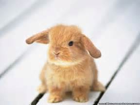 funny bunny quotes quotesgram