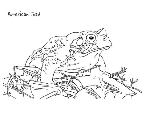 Printable Toad Coloring Pages Coloring Me Toad Coloring Pages