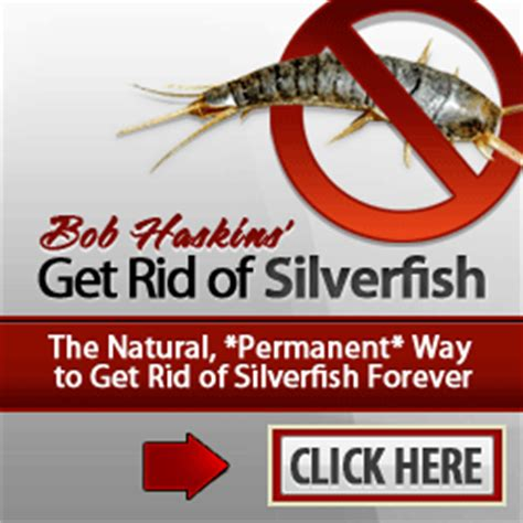getting rid of silverfish flying ant infestation