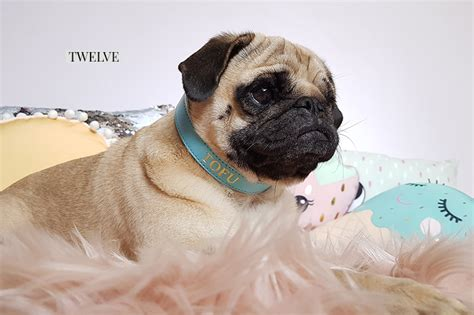 pug rescue ta 2017 gift guide for pugs the fashionista the pug diary