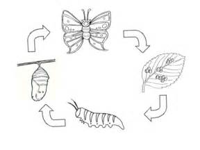printable butterfly life cycle
