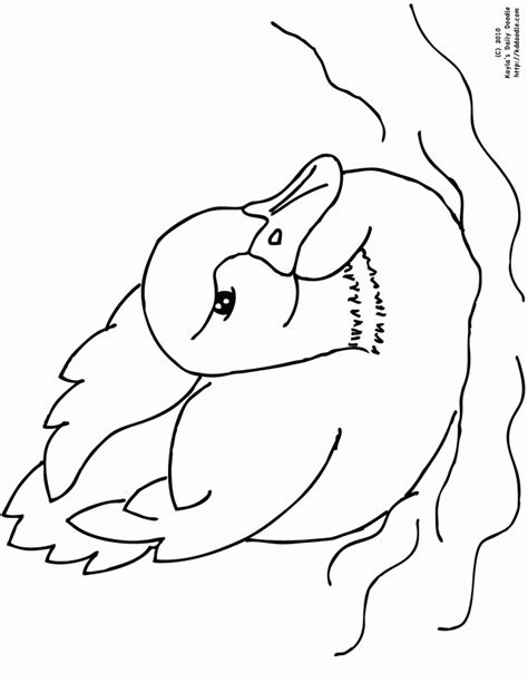 free baby ducks coloring pages