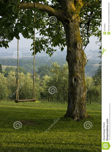 swing from tree to tree vertical backyard tree swing in tuscany italy stock