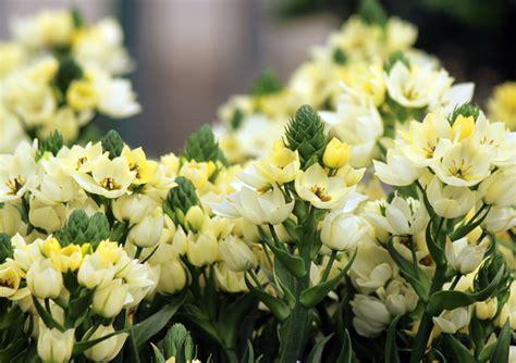 sun star indoor flowers plant care rocket farms