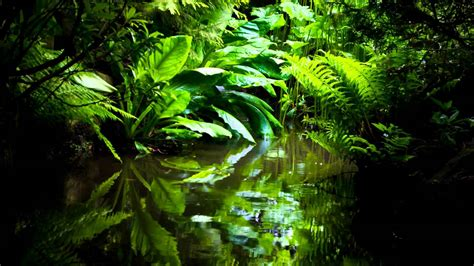 best royalty free royalty free nature ambient jungle sounds birds