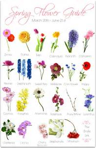 best 20 cosmos wedding flowers ideas on pinterest types of flowers flowers name list and