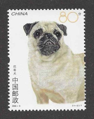 pugs in china fourteen facts about pugs you need to vivamune health