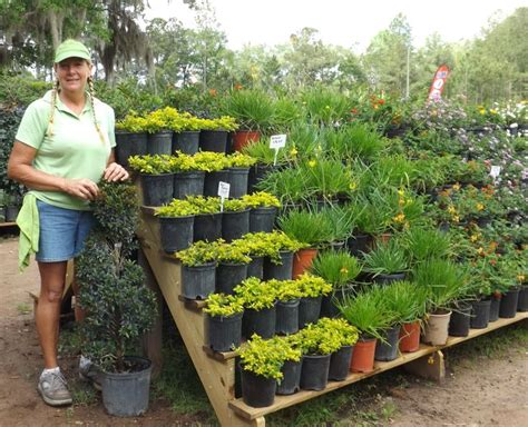 Garden Centre Ideas 17 Mejores Ideas Sobre Garden Center Displays En Pinterest Centro De Jardiner 237 A Escaparates Y