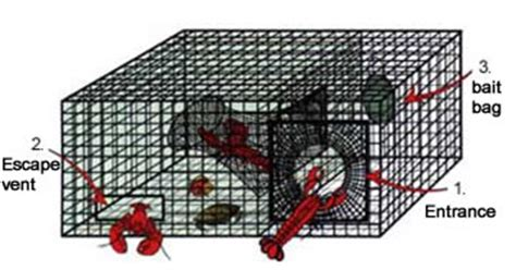 lobster trap diagram why we lose to south carolina texags