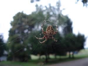 Garden Spider In Pa Spider Id Pittsburgh Living Garden Eat