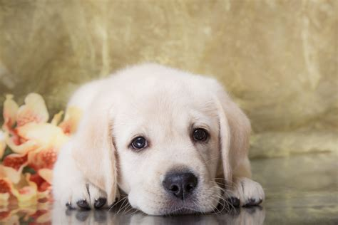 pic of puppies puppy pictures collection for free