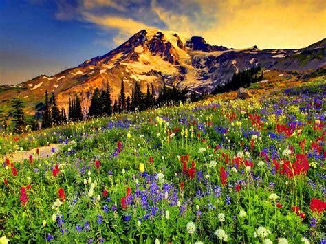 Flower Mountain mountain flowers mountains mountains