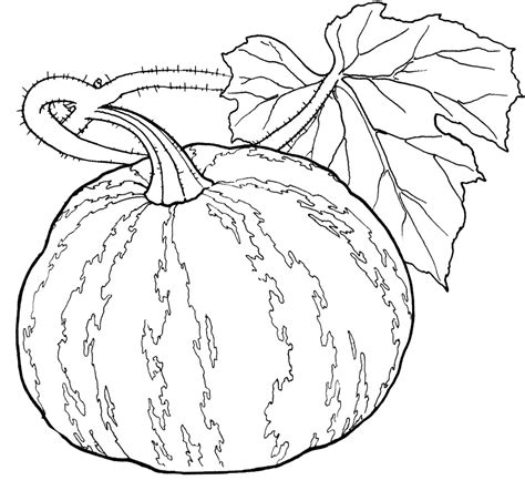 pumpkin soup coloring pages pumpkin parts coloring page pages reaic grig3 org