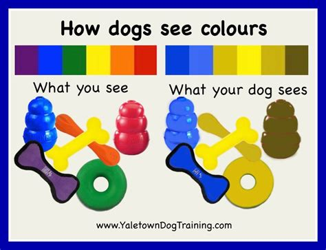 do cats see in color how dogs see colours yaletown