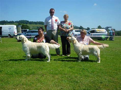 golden retriever rescue midlands golden retriever club midlands dogs our friends photo