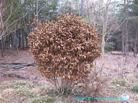 Gardenia Winter February 2014 Caniconfidimus