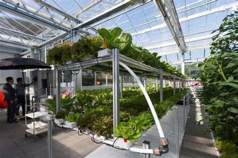 Aquaponics: Europe's Largest Urban Farm   Garden Culture