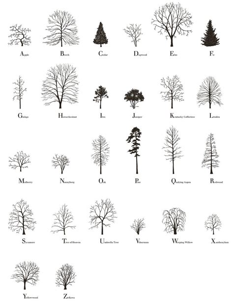 the tree alphabet