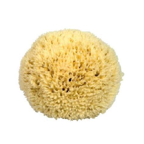 eponge de eponge de mer ultra pour le visage 10 cm