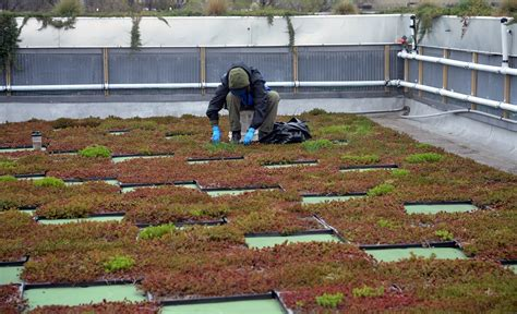 inaccessible new york earth day special the 5 boro green roof top terrace garden view new york garden my decorative