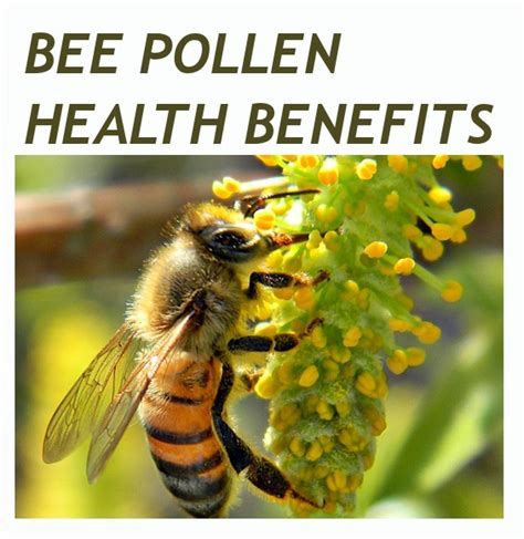 bee pollen and its benefits forever living products