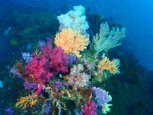 Stunning underwater plants and sea life on the ocean floor page 7