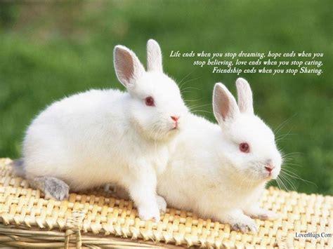 imagenes animales que saltan baby bunny wallpapers wallpaper cave
