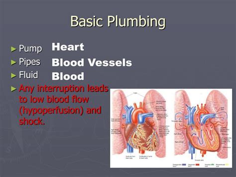 Plumbing Basics Ppt by Ppt Bleeding And Wounds Powerpoint Presentation Id 204049