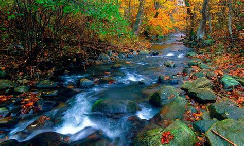 amazing waterfall  forest hd wallpaper