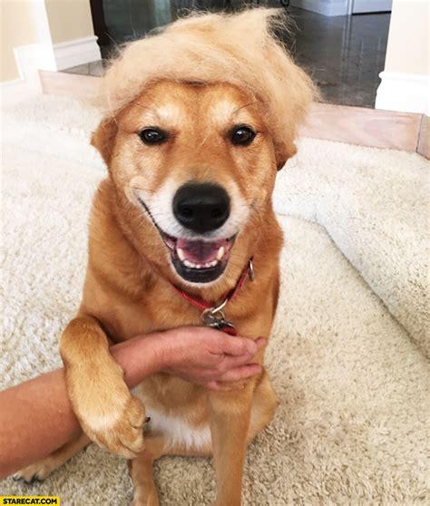 donald trump dog dog looking like donald trump hair starecat com