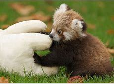 35 Baby Animals That Squeeze Massive Amounts Of Cute Into ... Fluffiest Kittens In The World