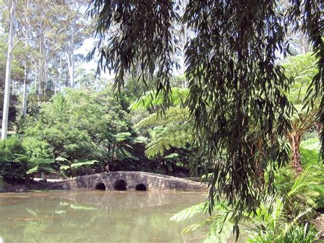Rural Historic Abandoned And Desolate Places Travels In Mt Tamborine Botanical Gardens