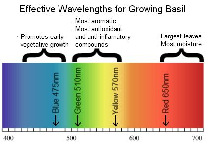 plant growth light spectrum the effects of light spectrum on plant growth use blue in
