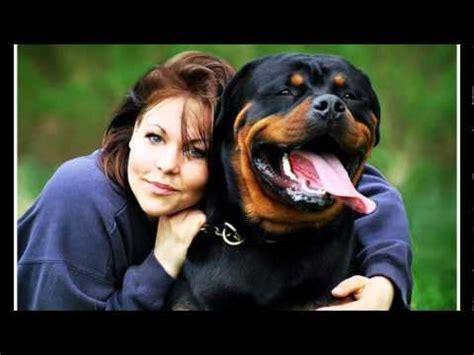 my rottweiler the best rottweiler in my rottweilervideos