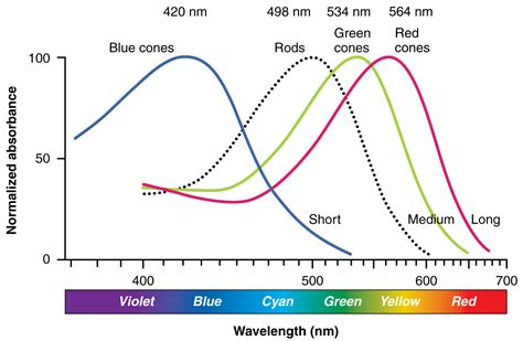wavelengths of light each hue in the visible spectrum has