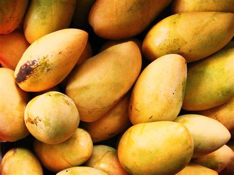 Ton Nasa Lele budidaya mangga panduan budidaya agro