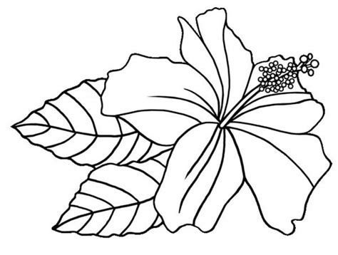 printable flower pictures to color beautiful flowers hibiscus coloring pages download free printable coloring