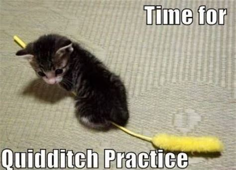 Favorite Meme - time for quidditch practice kitten memes and comics