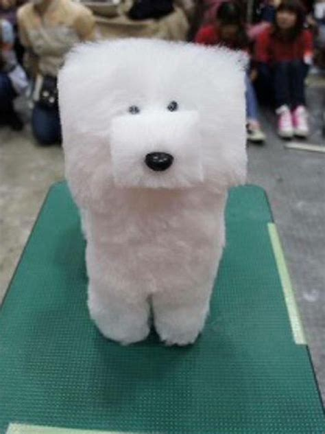 no haircut dogs will you be doing it doggy style craze for square pooch