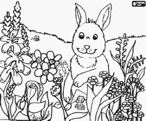 coloring pages field of flowers coloring pages printable 2