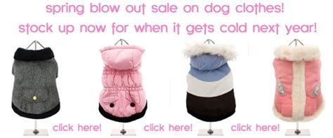 Blowout Sale Sweet Up To 1500 by Chihuahua A Information Site On Teacup Chihuahuas