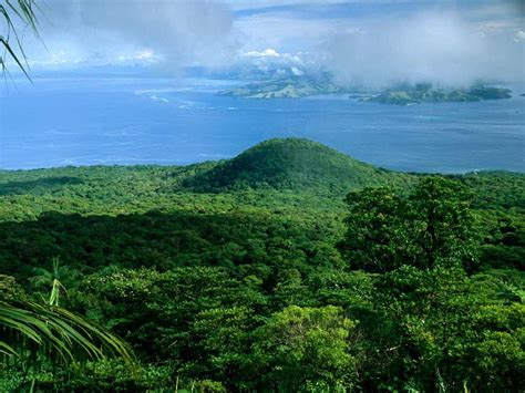 Landscape Definition Tagalog Forest Facts And Information