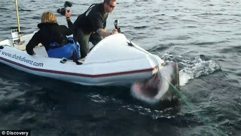 charter fishing boat tipping watch the terrifying moment a great white shark rams a