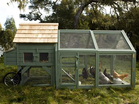 backyard chicken coop ideas williams sonoma chicken coops in dig it design hgtv