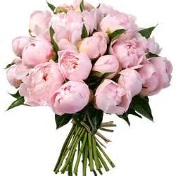 livraison fleurs aquarelle merveilleuses pivoines aquarelle livraison de fleurs