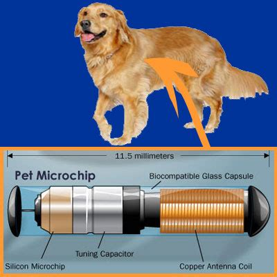 microchip for dogs should you microchip your pet trusty tails