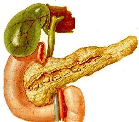 alimenti provocano stitichezza emorroidi dieta e alimentazione