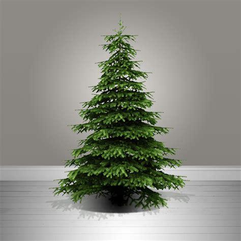 chrismes tree real tree nordmann fir edinburgh crimbotrees